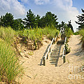 Wooden stairs over dunes at beach Print by Elena Elisseeva