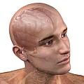 Head Anatomy, Artwork by Sciepro