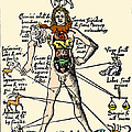 16th-century Medical Astrology by Cordelia Molloy