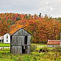 Autumn Farm by Steve Harrington