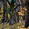 Autumn Landscape by Vladimir Kholostykh