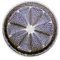 Fossil Diatom, Light Micrograph by Frank Fox