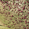 Fungal Spores, Sem by Steve Gschmeissner