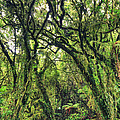 Native Bush by MotHaiBaPhoto Prints