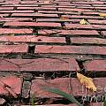 Old Red Brick Road by Yali Shi