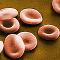 Sem Of Red Blood Cells by Omikron