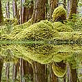 Swamp by David Nunuk