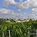 Village and vineyard of Saint-Emilion. Gironde. France by BERNARD JAUBERT
