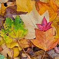 autumn leaves Print by Hans Engbers