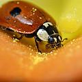 Beetle by Igor Sinitsyn