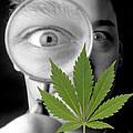 Cannabis Research by Victor De Schwanberg
