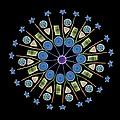 Diatom Assortment, Sems by Steve Gschmeissner