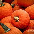 Pumpkins Print by Elena Elisseeva