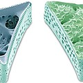 Diatoms, Sem Print by Steve Gschmeissner