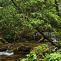 Rushing Mountain Stream by Thomas R Fletcher