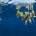 Tropical Seaweed by Alexis Rosenfeld