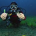 Invasive Seaweed Control by Alexis Rosenfeld