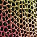 Diatom Alga, Sem by Steve Gschmeissner