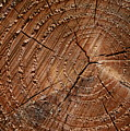 A Close Up Of Tree Rings by Sabine Davis