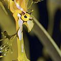 A Delicate Leafy Sea Dragon Head Detail by Jason Edwards