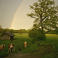 A Double Rainbow Arcs Over A Field by Carsten Peter