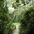 A Flooded Path At Manoa Falls by Stacy Gold