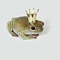 A Frog Wearing A Crown, Studio Shot by Paul Hudson