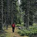 A Lone Hiker Enjoys A Wooded Trail by Tim Laman