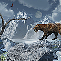 A Lone Sabre-toothed Tiger In A Cold by Mark Stevenson