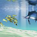 A Sailfish Hunts Prey On A Sandy Reef by Corey Ford