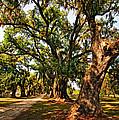 A Southern Stroll by Steve Harrington