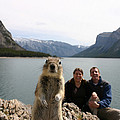 A Squirrel Takes The Shot By Tripping Print by Melissa Brandts/National Geographic My Shot