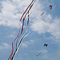 A Train Of Kites Flies At The Jockeys Print by Stephen Alvarez