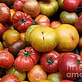 A Variety Of Fresh Tomatoes - 5d17840 by Wingsdomain Art and Photography