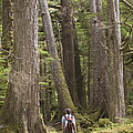 A Woman Walks In Old Growth Forest by Taylor S. Kennedy