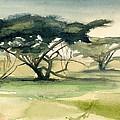 Acacia by Stephanie Aarons
