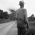 African American Man In Living In Rural by Everett