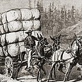 African American Teamster Transporting by Everett