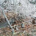 After The Ice Storm In Maine by Jeannie Atwater Jordan Allen