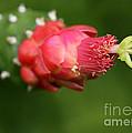 Alien Cactus Flower