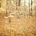 All Is Love by Irene Suchocki