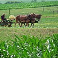 Amish At Work by Dottie Gillespie