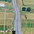 Amish Horse And Buggy On Country Road by Jeremy Woodhouse