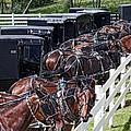 Amish Parking Lot by Tom Mc Nemar