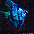 Angelfish by Wingsdomain Art and Photography
