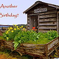 Another Birthday Antiques by Cindy Wright