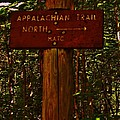 Appalachian Trail by Sarah Buechler