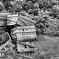 Apple Crate Bw by JC Findley