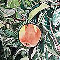 Apple Tree Sketchbook Project Down My Street by Irina Sztukowski