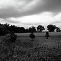 Approaching Storm Over Tree Farm by Jan W Faul